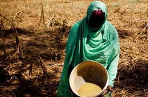 Fassala Niéré : Sous l'emprise de la guerre et de la famine dans société famine_au_sahel-300x197