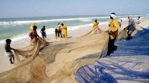 Pêche de surface : 50 millions de dollars de rentrées en 2011 dans Economie peche-en-mauritanie-300x168